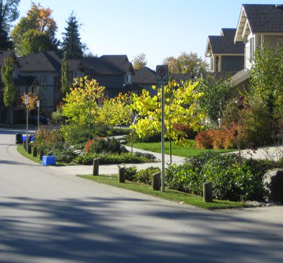 Silver Maples Subdivision Rain Garden & Retention Facilities