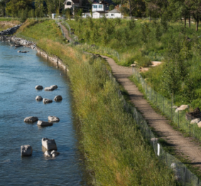 Bow River Bioengineering Demonstration and Education Project (BDEP)