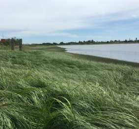 YVR Habitat Enhancement Assessment and Action Plan